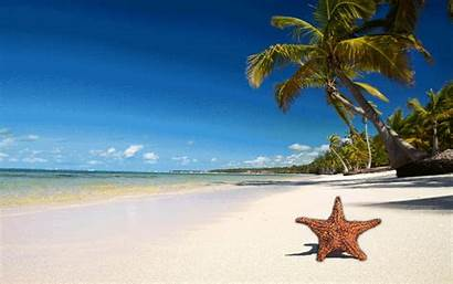 Beach Tropical Beaches Gold Photoshopbattles Starfish Permalink