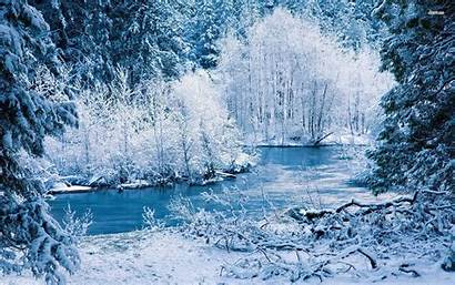 Winter Forest Snow Nature Icy Wallpapers Landscape