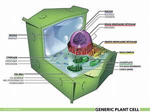 Jamal Campbell  U2014 Illustration Of A Generic Plant Cell For