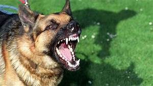 Snarling dog : What it's mean and how to deal with Dog ...