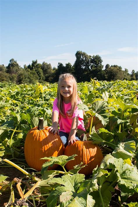 Pumpkin Patch Mayflower Ar don t miss these 10 great arkansas pumpkin patches this fall