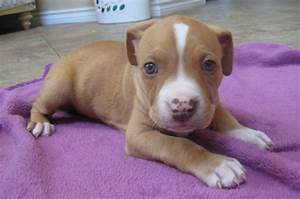 went back home and apparently my neighbors got a baby pitt ...