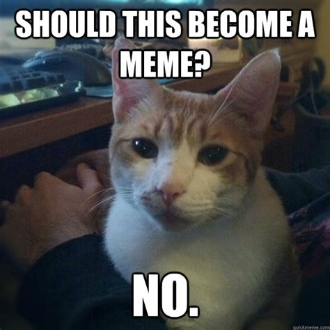 No Meme Cat - should this become a meme no no cat quickmeme