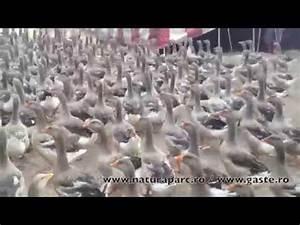 Ferma Ecologica De Rate Si Gaste Natura Parc YouTube