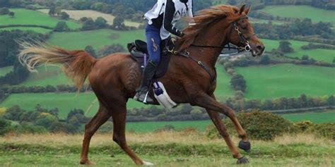 horse muscles endurance muscle support nutritional body most kellon dr supporting
