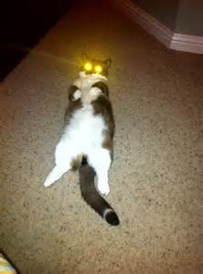 Cats with Laser Eyes Space