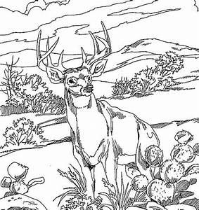 Whitetail Deer Coloring Pages 7 18128