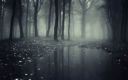 Forest Spooky Background Wallpapers Wallpaperplay