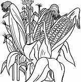 Corn Coloring Pages Growth Cycle Printable Vegetable Activities Boys Foods Condiment Colouring Vegetables Sheets Cartoon Carrots Carrot Enriching Salads Typical sketch template