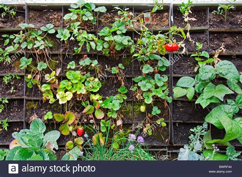 Edible Vertical Garden by Skid Row Stock Photos Skid Row Stock Images Alamy