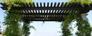 Plante Grimpante Pergola : pergola pour plante grimpante un support naturel pour cr er de l 39 ombre ~ Nature-et-papiers.com Idées de Décoration