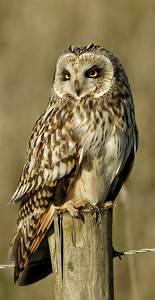 Best 25+ Owl photos ideas on Pinterest | Beautiful owl ...