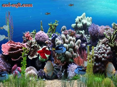 arriere plan bureau animé gratuit free aquarium desktop wallpaper wallpapersafari