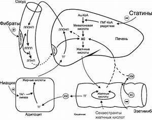 Физиотенз лекарство от гипертонии