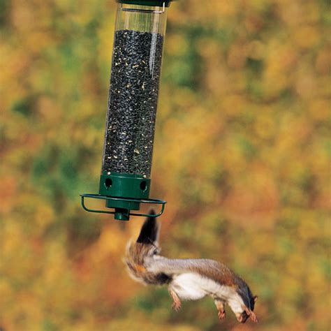 deter squirrels with these bird feeder squirrel proofing tips