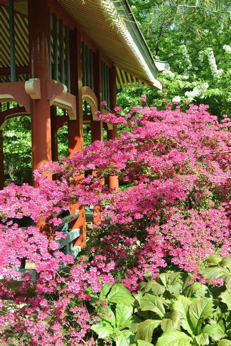 Botanischer Garten Berlin Stinkblume by Botanischer Garten Berlin Empfehlungsportal Reisen