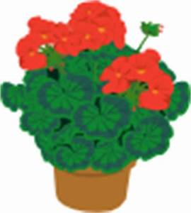 Geranium In Pot clip art Free Vector / 4Vector