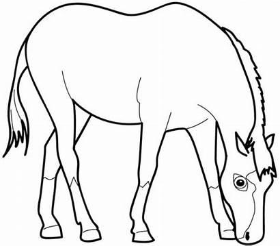 Horse Coloring Grass Eating Horses Cartoon Drawing