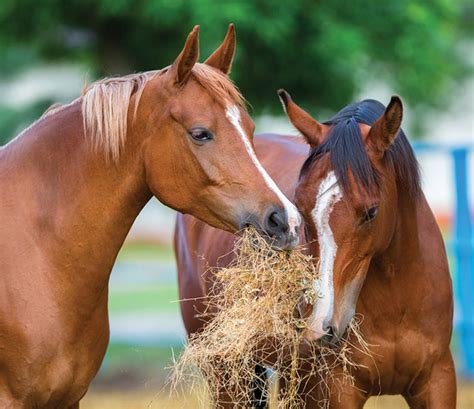 healthy horses foods horse petsourcing providing important animal own any very