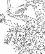 Coloring Goldfinch Eastern Iowa Pages State Birds Bird sketch template