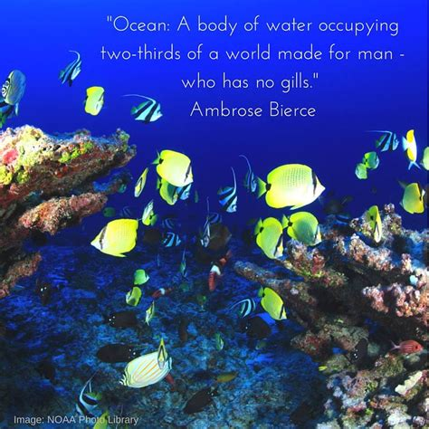 About Marine Life  Home  Facebook