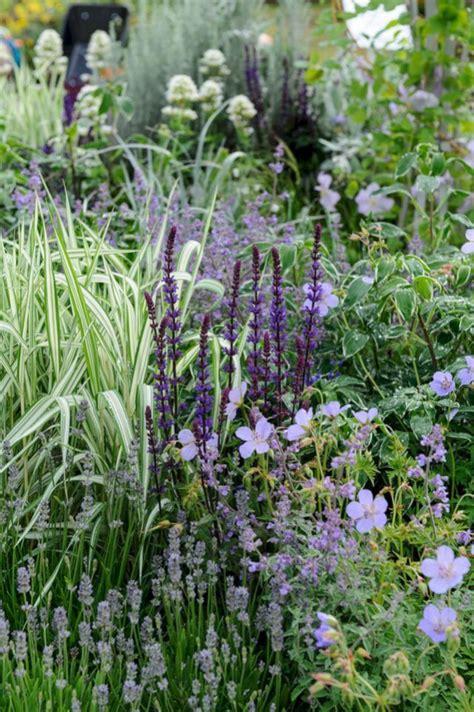 callisia bloemen 25 beste idee 235 n over blauwe bloemen op pinterest