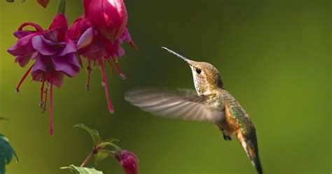 When To Put Up Hummingbird Feeders