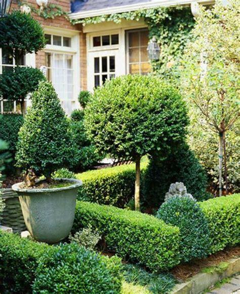 Buchsbaum Pflanzen Und Gärten  Wundervoll In Terrakotta