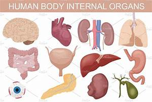 Human body internal organs set. ~ Graphics ~ Creative Market