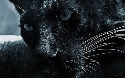 Panther Jaguar Wallpapers Desktop Wallpapersafari Backgrounds Computer