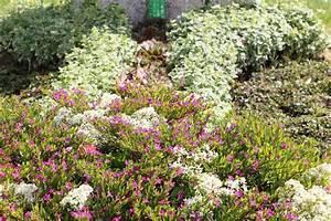 Blumen Für Sonnigen Standort : grabbepflanzung im herbst ideen f r alle standorte und ~ Michelbontemps.com Haus und Dekorationen