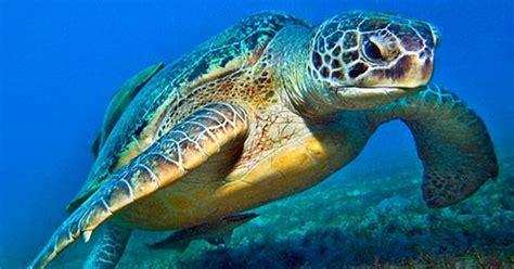 Diçka për breshkat e ujit - Kafshët