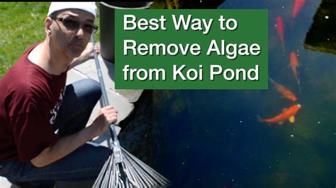 Best Way to Remove Algae from Koi Pond - YouTube