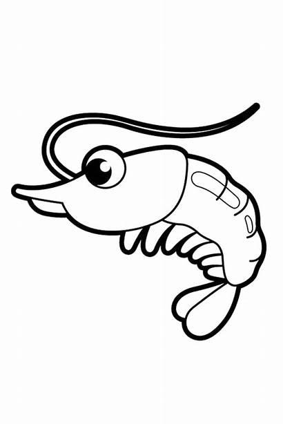 Shrimp Coloring Pages Drawings Drawing Boat Prawn