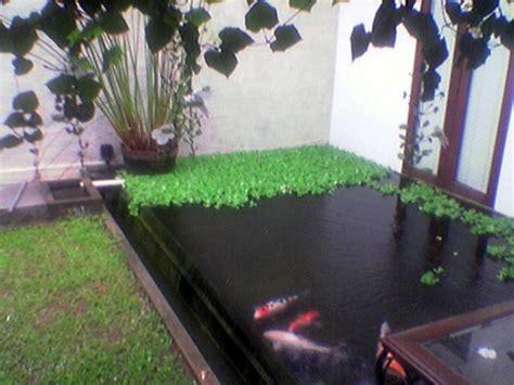 garden design disain kolam koi