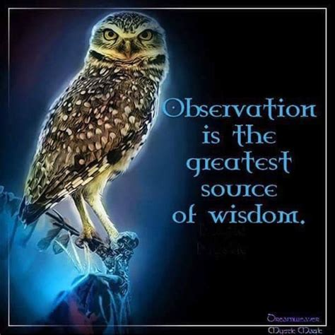 Best 25+ Owl Quotes Ideas On Pinterest
