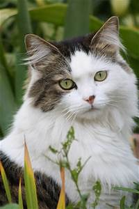 The most beautiful cat in the world. | Flickr - Photo Sharing!