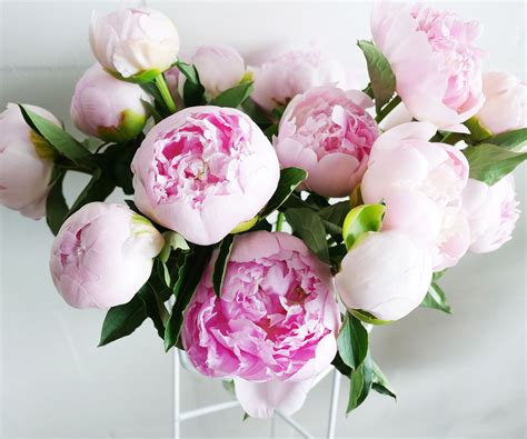 tips  perfect peonies