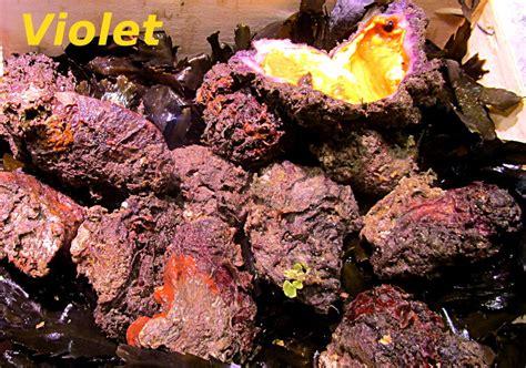 cuisine scientifique dictionnaire de cuisine et gastronomie violet