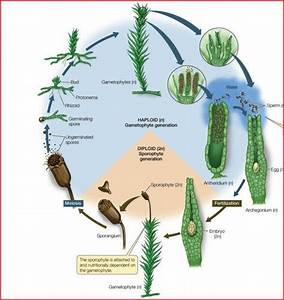 Bio 1b Study Guide  2010-11 Feldman
