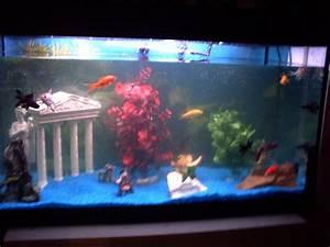 Poisson Aquarium Eau Chaude : vos aquarium eau chaude ou froide poissons ou tortue ~ Mglfilm.com Idées de Décoration