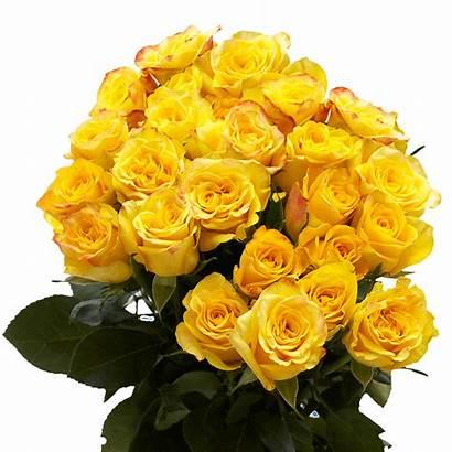 Yellow Roses Dozen Fresh Flower Perfect Valentine