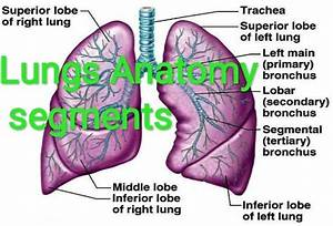 Why Are Lungs Purple