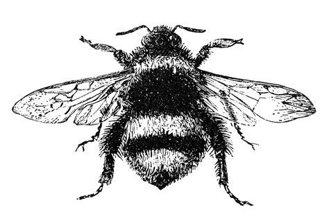 27+ Black And White Bumblebee Tattoos