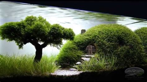 bonsai aquascape youtube