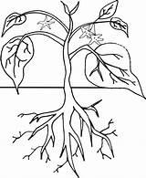 Plant Clipart Coloring Cycle Pages Plants Planting Growing Worksheet Worksheets Drawing Halaman Seed Yahoo Preschool Homeschooling 3rd Grade Printable Pdf sketch template