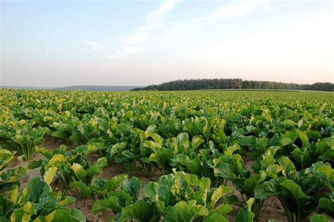youth farming programs  fight juvenile