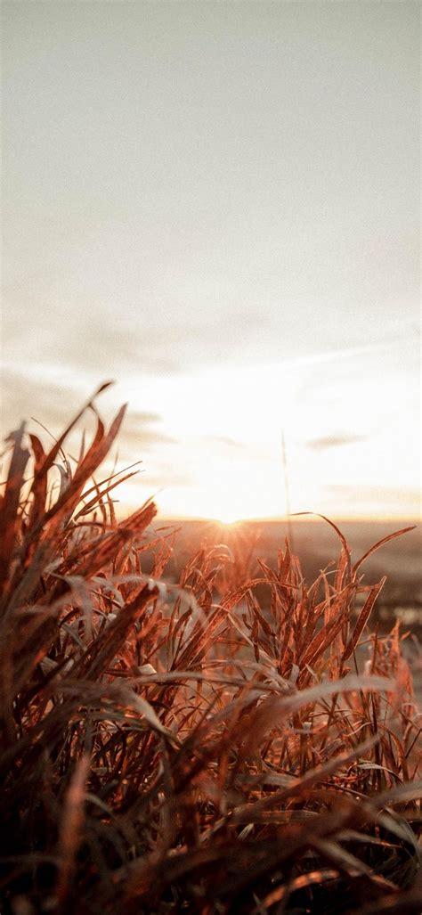 Sunrise Phone Wallpaper 1080x2340 018