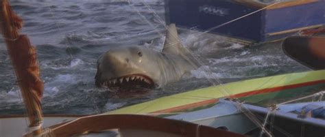 Jaws 2 Boat Attack by Jaws 2 Shark Attack Www Imgkid The Image Kid Has It