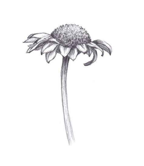 daisy drawing ideas  pinterest draw flowers